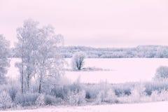 Snövinternatur Fotografering för Bildbyråer