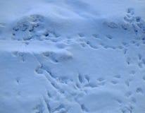 Snöyttersida med skuggor och fågelspår Royaltyfri Bild