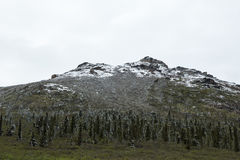 Snö-dammat av landskap Arkivbild