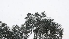 Sn?gran, sn?fall, jul ser arkivfilmer
