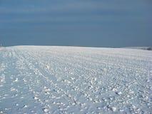 Sn?ig f?lt Full ram av gr?sstammar som besprutas med sn? arkivfoto