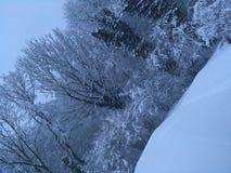 Sn?ig skog arkivfoto