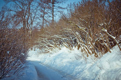 Snö-täckt väg i buskarna Arkivbild