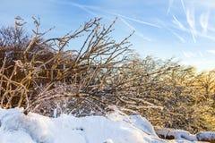 Snö-täckte buskar Arkivfoto