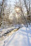 Snö täckte vinterträd Arkivfoto