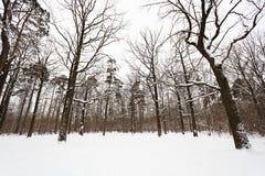 Snöa dolda ekar och sörja träd på kanten av skogen Arkivfoto