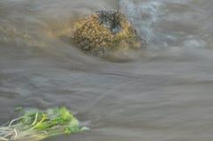 Snabb aktuell sten för flodöversvämning Royaltyfri Foto