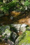 snabb flödande skogsmark för running ström Royaltyfri Bild