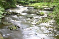 snabb flödande skogsmark för running ström Royaltyfri Foto