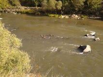 Snabb flod Arkivfoto