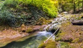 Snabb flod i grönskan royaltyfri bild