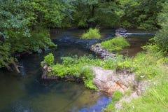 Snabb flod, skog, stenpassage Arkivbilder