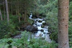 Snabb flod till och med skogen i fjällängberget Fotografering för Bildbyråer