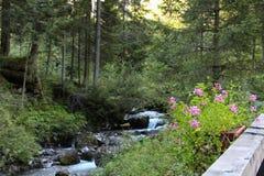 Snabb flod till och med skogen i fjällängberget Royaltyfri Foto