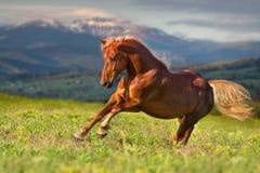 Snabb hästkörning Fotografering för Bildbyråer