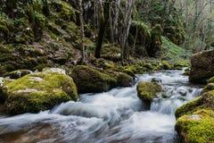Snabb skogflod som flödar bland stenar Moss på stenar Strandzh Royaltyfri Fotografi