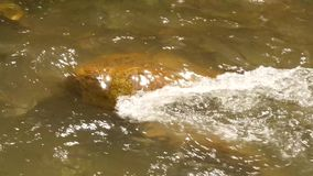 Snabb vattenström som flödar bland stenar i den lilla bergfloden 4K lager videofilmer