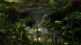 Snabb vattenström som flödar bland stenar Liten bergflod som lowing mellan stora stenar och grön vegetation 4K stock video