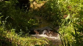 Snabb vattenström som flödar bland stenar Liten bergflod som lowing mellan stora stenar och grön vegetation långsamt stock video