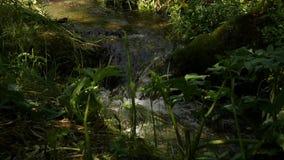 Snabb vattenström som flödar bland stenar Liten bergflod som lowing mellan stora stenar och grön vegetation långsamt arkivfilmer