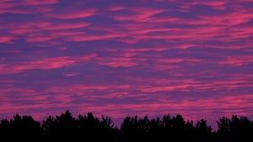 Snabba moln på solnedgånghimlen över pinjeskogen, tidschackningsperiod stock video