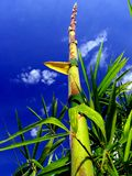 snabbast - växande värld för växt s Arkivfoton