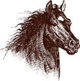 snabbt växande häst Arkivbilder