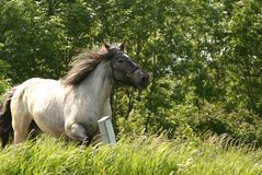 snabbt växande häst arkivbild