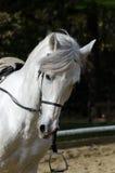snabbt växande häst Arkivfoton