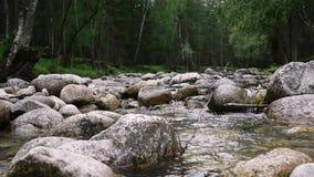 Snabbt vattenflöde i den lilla bergfloden, träd längs flodbanken arkivfilmer