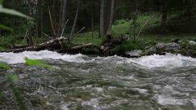 Snabbt vattenflöde i den lilla bergfloden, träd längs flodbanken lager videofilmer