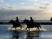 snabbt växande hästar Royaltyfria Bilder