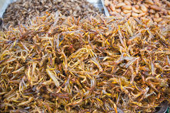 Snack.( fried grasshoppers ) Stock Image