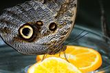 Snack Time. Butterfly taken at the Mainau Botanical Gardens near Konstanz, Germany stock image