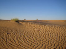 Snad desert. Sand dune in the Israeli desert Stock Photography