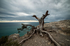 Snag against the sky and sea Royalty Free Stock Photos