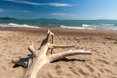 Snag on a beach Royalty Free Stock Photos