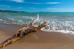 Snag on a beach Royalty Free Stock Photo