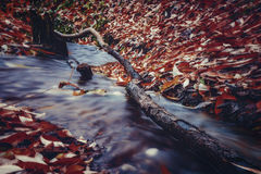 Snag in a forest stream. In autumn Royalty Free Stock Images