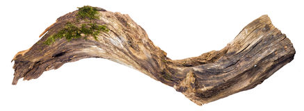 Snag with an interesting shape Stock Image