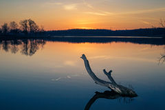 Snag in the lake against a sunset Royalty Free Stock Photography