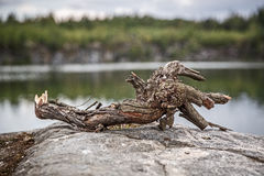 Snag on the lake Royalty Free Stock Photography