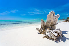Free Snag On The Tropical Beach Stock Photos - 61305983
