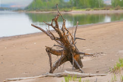 Snag on the river shore Royalty Free Stock Photos