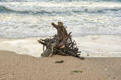 Snag on the sea shore Royalty Free Stock Images