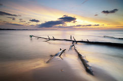 Snag on the shore Royalty Free Stock Photo
