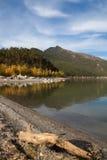 Snag sur le rivage d'un lac de montagne Image stock