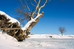 Snag and tree on winter lake shore Stock Photos