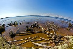 Snaged shore in Karelia Royalty Free Stock Images