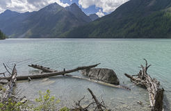 Snags near the shore. Kucherla lake. Altai Mountains, Russia. Stock Photography